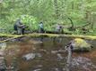 Ebapärlikarpide kasvuplaatide esimene vette viimine.