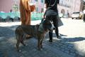A rally was held at Toompea outside the Riigikogu on Wednesday in support of banning fur farms.
