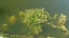 Плавучие острова, очищающие от загрязнения.