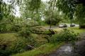 Последствия шторма в Таллинне.