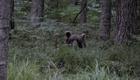 Медведь тоже появился.