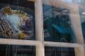 """Kai Kaljo klaastaldrikute näitus """"Eksperimendid mikrokosmosega"""" Kunstiaknal"""