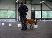 Лучшие служебные собаки Эстонии.