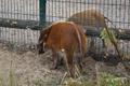 Tallinna loomaaeda saabusid uued elanikud.