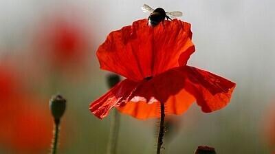 Mesilane värvilisel tööpostil.