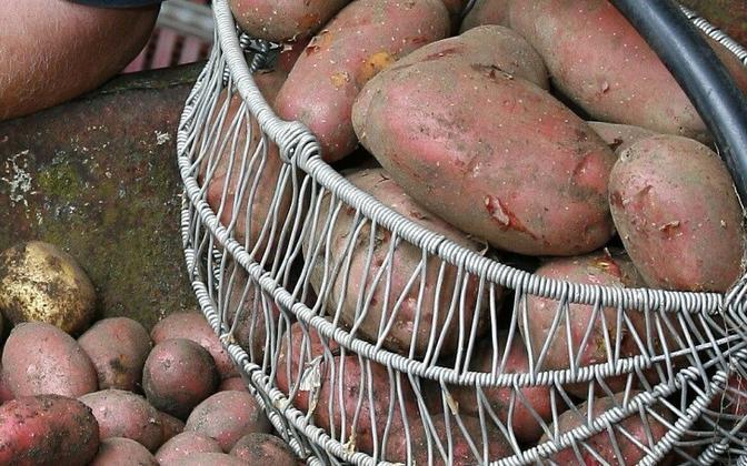 Raamatus paljastatakse kartuli kurjus