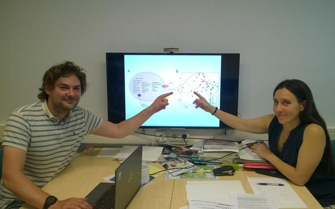 TÜ inimese molekulaargeneetika teadur Siim Sõber ja professor Maris Laan.