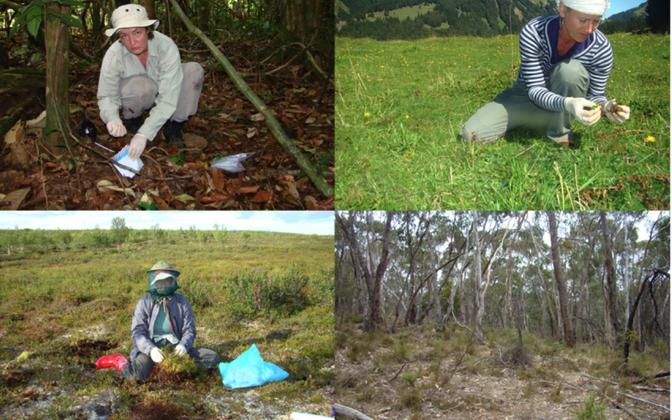 Krohmseeni leidub enamikus maismaaökosüsteemides troopilistest vihmametsadest kuni arktiliste tundrateni. Näiteid selle uurimuse tarbeks tehtud proovivõtust ökosüsteemidest üle maailma.