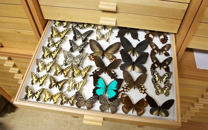 NATARC develops services related to hosting and computing of scientific repositories and data archives, like the pictured butterfly collection