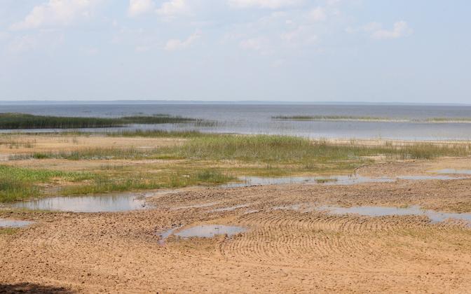 Madal- ja kõrgveeperioodid vahelduvad Võrtsjärves umbes 30 aastaste tsüklitena ning just praegu võiks olla kõrgvee periood. Pildil Võrtsjärve rand Trepimäel.