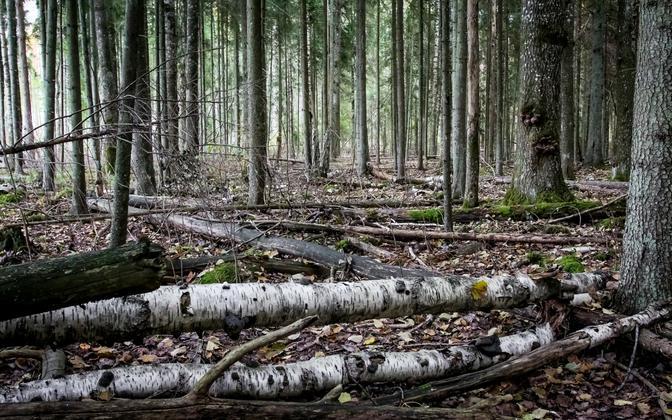 Looduskaitsealune mets.
