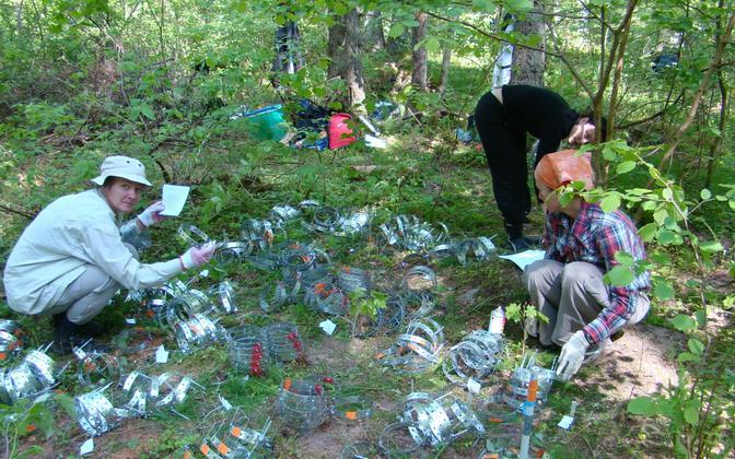 Mari Moora (pildil paremal krohmseente uuringul Koerus) ja tema kolleegid on viimastel aastatel jälginud, milline on krohmseente mitmekesisus lokaalselt ja globaalselt ning kuidas reageeritakse keskkonnamõjudele.