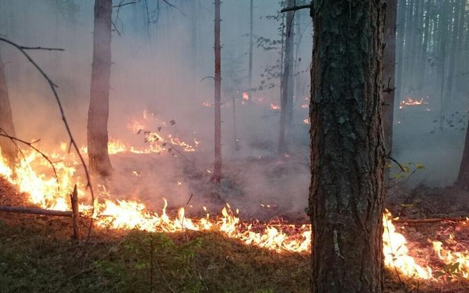 Kuningaküla metsapõleng.