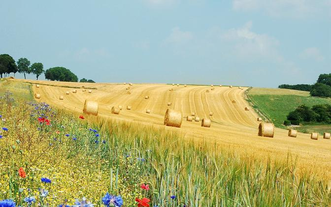 Maakasustuse muutused soosivad liigikadu.
