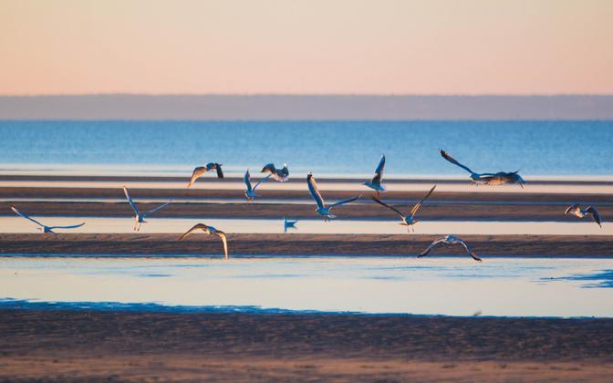 Pärnu beach. The city is Estonia's