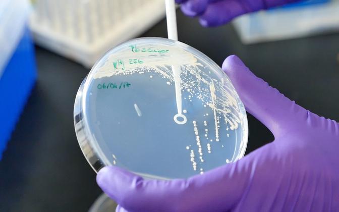 Pärmseened Petri tassil.