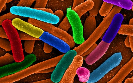 Inimeses elab peale kolibakterite veel mitmeid tundmatuid mikroobe.