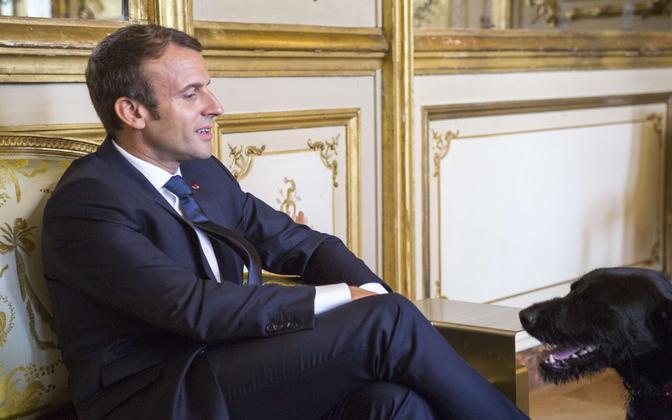 Emmanuel Macron ja Prantsusmaa presidendi ametlik koer Nemo.
