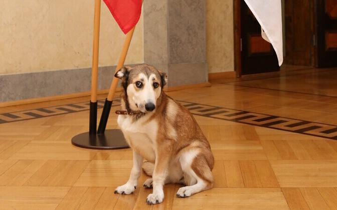 Koer nimega Fauna.