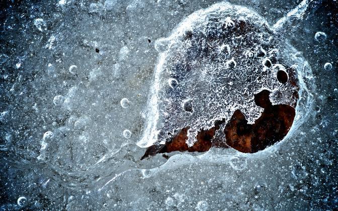 Teadlased uurisid 50 000 aasta vanustest igikeltsaproovidest saadud DNA-d.