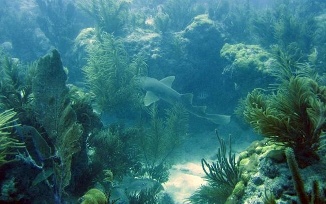 Vetikad moodustavad olulise osa Maa ökosüsteemist.