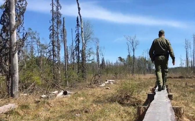 Swampy terrain along Estonia's eastern border.