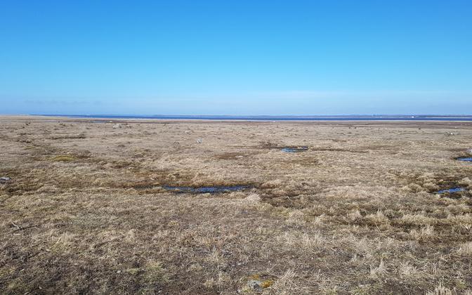 Põgari-Sassi rannaniit Läänemaal, Matsalu rahvuspargis, mis on rändel  olevate haneliste armastatud puhke- ja söögikoht.
