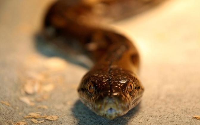 Змея. Иллюстративное фото.