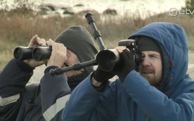 Birdwatchers at Põõsaspea at the weekend.