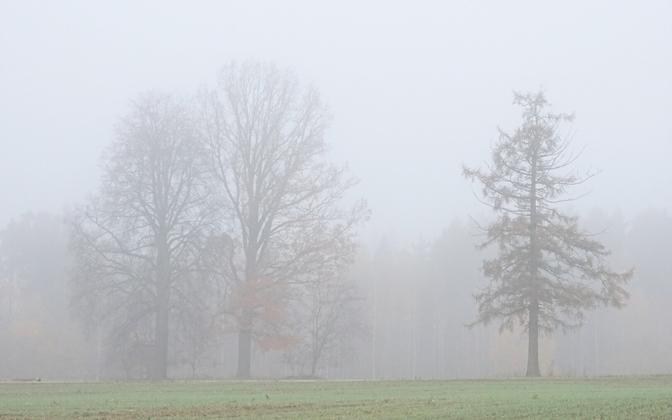Foggy weather.