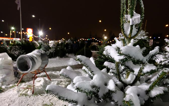 Christmas trees for sale in a parking lot near Lõunakeskus shopping center in Tartu.