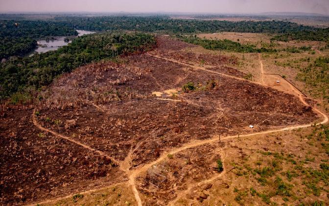 Brasiilia senised meetmed ja moratooriumid on suutnud küll metsaraiet vähendada, aga mitte peatada