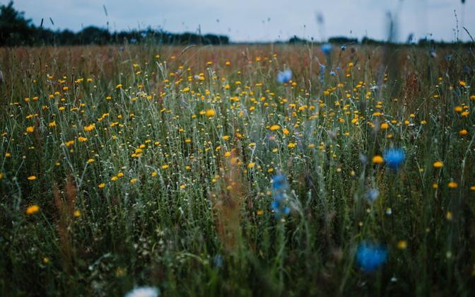 В Тарту разобьют парки, отличающиеся природным богатством.
