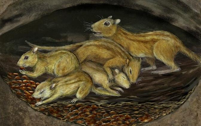 Ehkki nad surid välja juba 35 miljoni aasta eest, meenutas nende elulaad hilis-kriidis arvatavasti tänapäevaste urus elavate oravate oma.