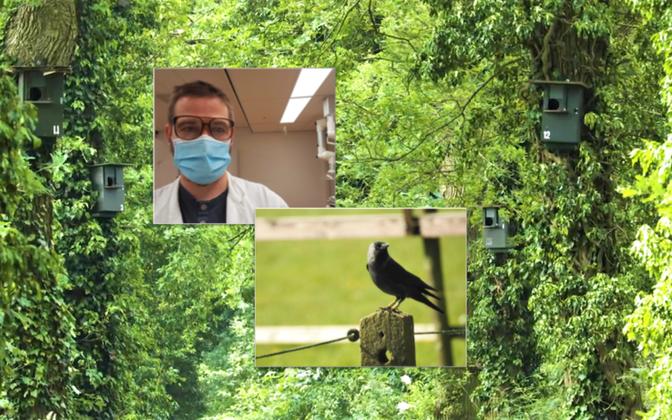 Jaanis Lodjak Hollandis Groningeni ülikooli laboris, kus analüüsis lindude vereproove: käimas on IGF-1, keha kasvamise ja korrasolekuga seonduva uurimine