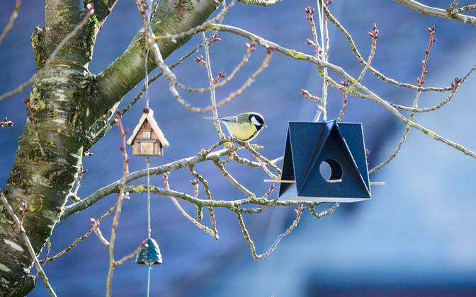 Kui oled hakanud linde talvel toitma, tuleb seda teha järjekindlalt.