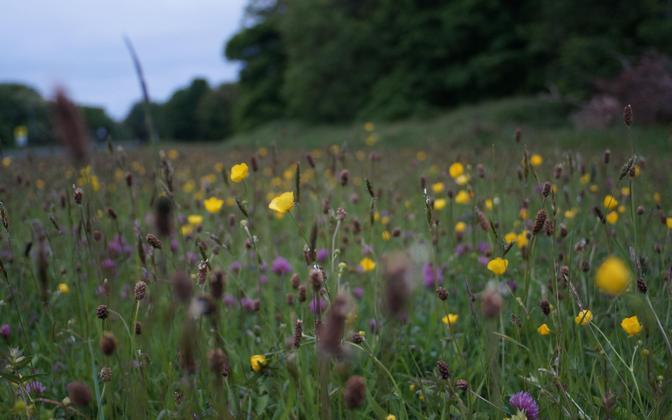 Krohmseened annavad taimedele mullast pärit toitaineid.