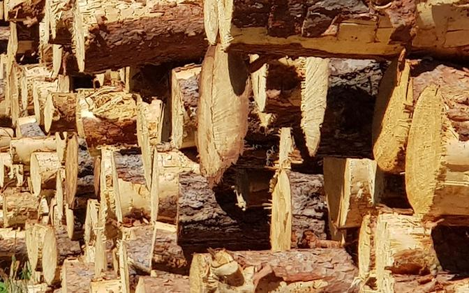 Timber - photo is illustrative.