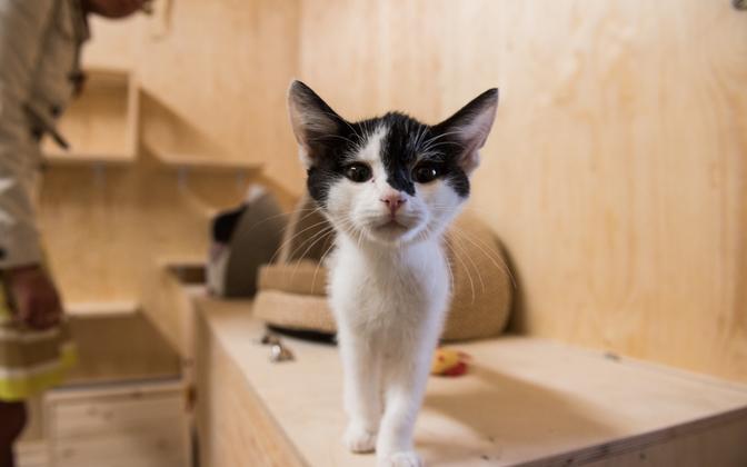 Kass loomade varjupaigas