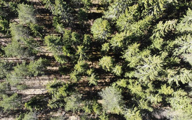 Alutaguse mets.