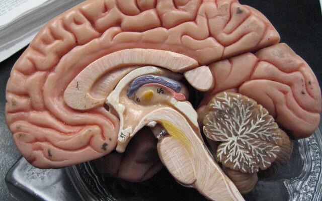 Viimaste uuringute järgi on haigutuse funktsiooniks pigem aju jahutada.