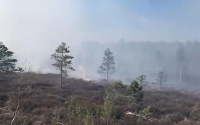 Пожар на торфяниках Ряэма.