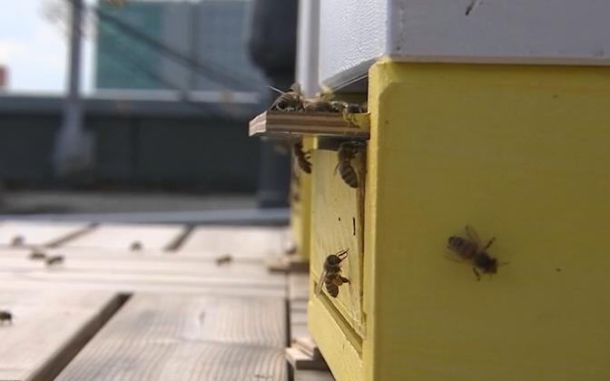 Bees on the roof of the PPA building.