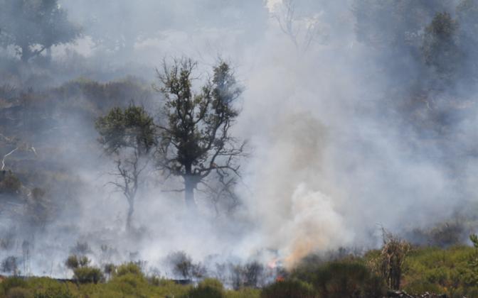 Sitsiilia metsapõleng.