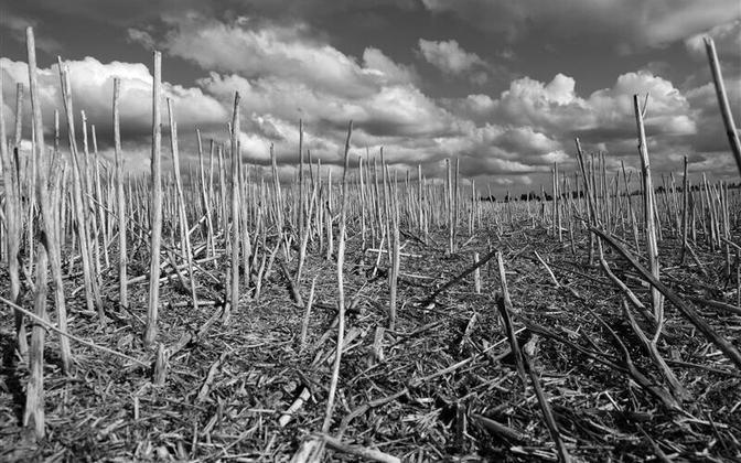 Looduslikke kooslusi ei tohiks senisel kiirusel põllumaaks muuta.