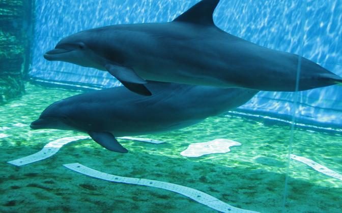 Delfiinid suhtlevad vilede keeles.