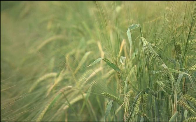 Цель принятого закона - сократить бюрократию и более эффективно поддержать сельскохозяйственных производителей и предпринимателей.