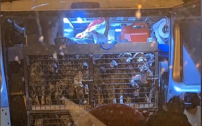 Скриншот с видео, на котором видны клетки с собаками.
