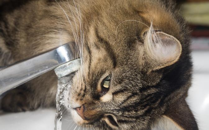 Степень жесткости воды в Тарту сильно варьирует.